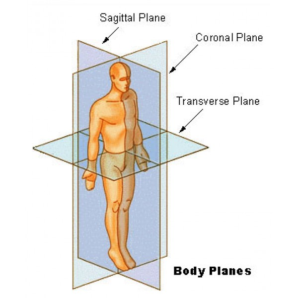 Anatomy Sagittal Plane Images Human Body Anatomy